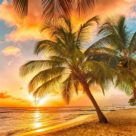 Hd Tropical Wallpapers On Wallpaperdog