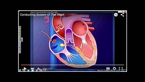 The Electrical Conduction System Of The Heart And How It