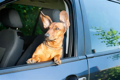11 Driving Dogs Who Really Know What They're Doing