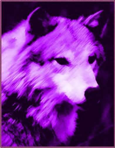 Blue And Purple Wolf Wallpaper by Purple Wolf Endangered Species Threaten All Animals