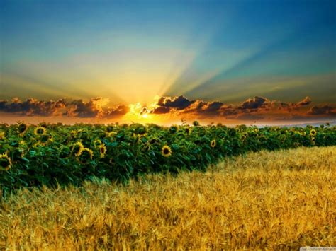 Summer Season Wallpapers  One Hd Wallpaper Pictures