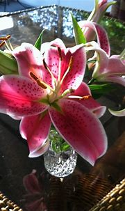 17 Best images about Stargazer lily on Pinterest ...