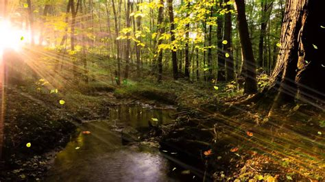 Bright Water Animated Wallpaper - light forest animated wallpaper http www desktopanimated