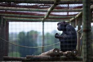 Sad Eyes & Empty Lives: Sad Wild Animals in Zoo Myth ...