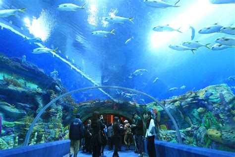 largest aquarium in the us world s largest aquarium opens in china