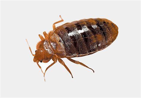 pest control bed bugs  termite control  des moines iowa