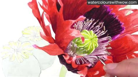 paint  realistic poppy centre  watercolor