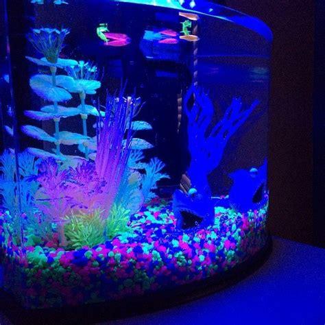 black light aquarium black light fish tank fancy glofish aquarium kit initial