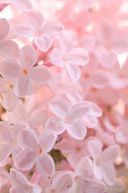 Rosa Pastello Sfondo Sfondi Tumblr