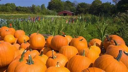 Harvest Fall Pumpkin Autumn Wallpapers Farm Garden