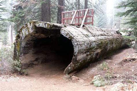 Hollow Log (balch Park)