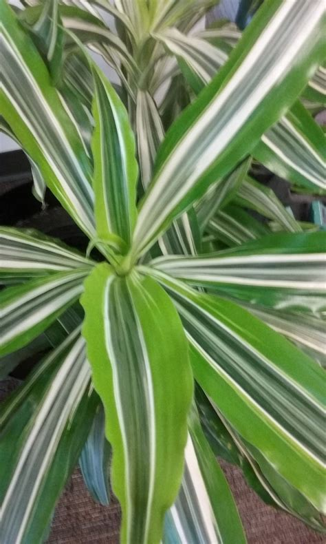 names of different houseplants modern house