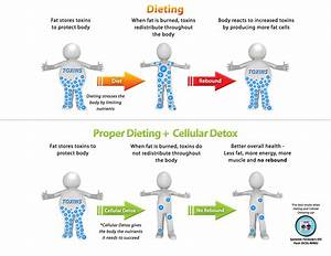 Dieting And Detox  How To Lose Toxic Fat For Good