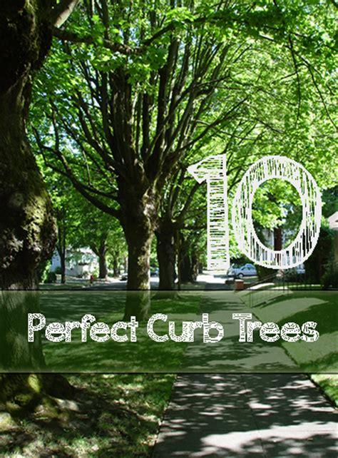 perfect curb trees   park strip