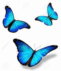 Papillon clipart butterfly fly - Pencil and in color ...