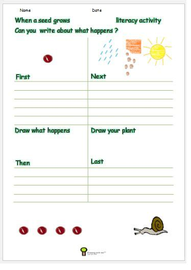 growing a seed worksheet plant worksheet activity science