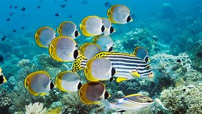 Water Under Fishes Yellow Sea Creature Wallpapers