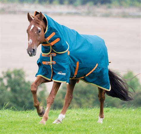 winter warm horse keep ts horses perfect don