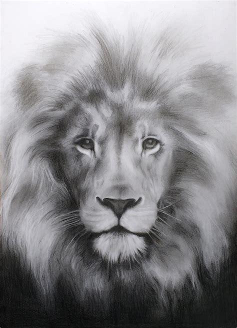 lion drawing   premium design templates