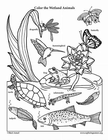 Coloring Animals Wetland Nature Science Habitats Pages