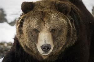 U0026 39 It U0026 39 S A Lightning Strike U0026 39   Bear Attacks In Alaska Leave