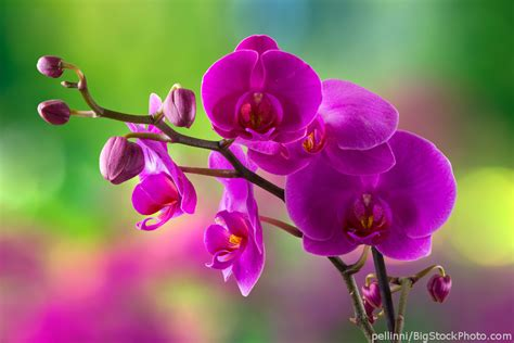 phalaenopsis orchid house plant list my house plants