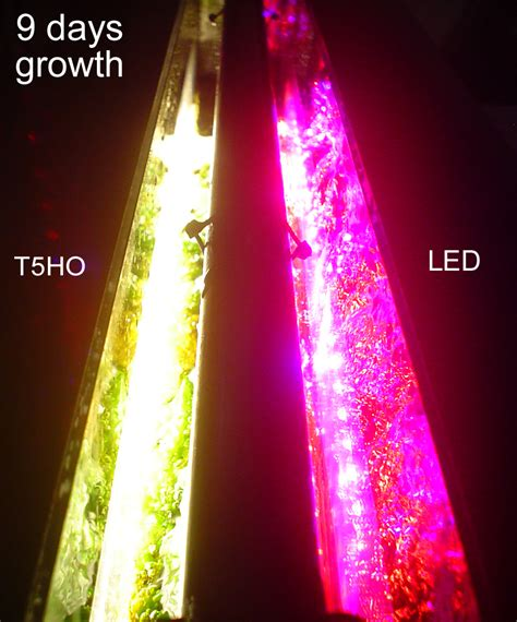 refugium led grow lights mega powerful nitrate and phosphate remover replaces