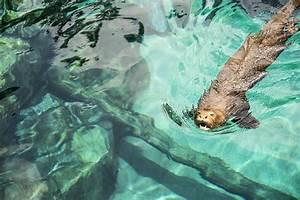 Singapore River Safari   Flickr - Photo Sharing!