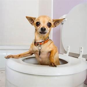 dog health tips diarrhea
