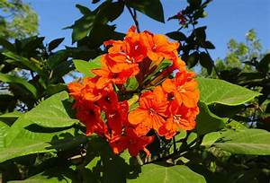 Florida Plant Identification For Beginners