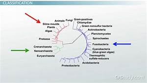 What Is Bacteria  - Definition  U0026 Types