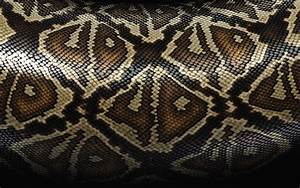 wallpapers: Snake Skin Wallpapers