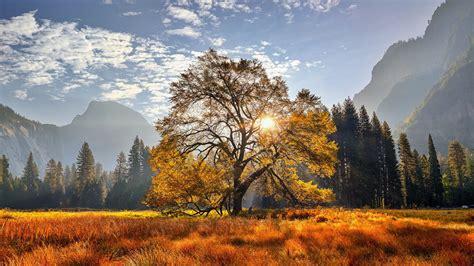 Yosemite National Park California Meadow Mountain With