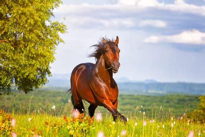 Allianz Op Versicherung Pferd