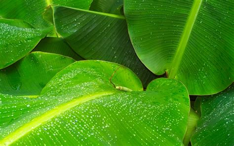 green leaves water drops wallpapers