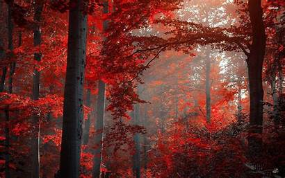 Forest Nature Wallpapers Ruby Backgrounds Views Baltana