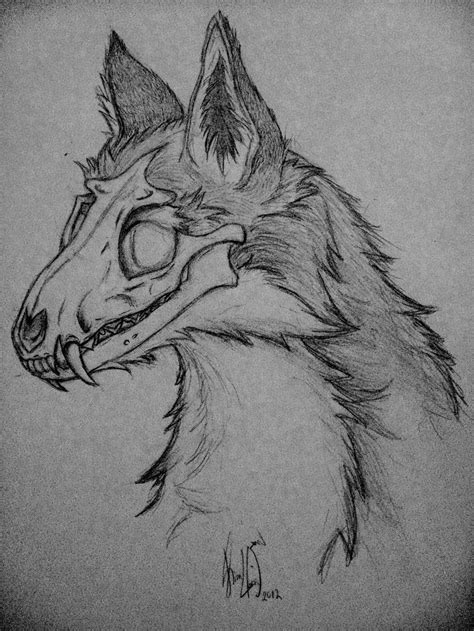 Coyote Skull Drawing Wwwpixsharkcom Images Galleries