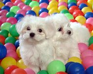 Baby Dogs Puppies