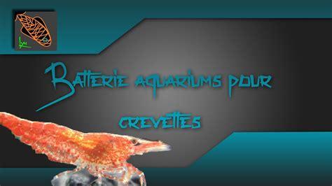 crevette d aquarium d eau douce ma batterie d aquariums pour crevettes d eau douce lyn aquariophilie