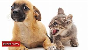 Cats May Be As Intelligent As Dogs  Say Scientists