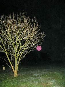 Pink Orb Meaning  The Meaning Of Pink Orbs
