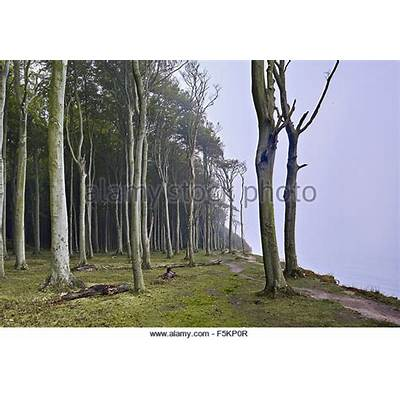 Nienhagen Stock Photos & Images - Alamy