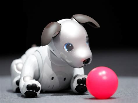 Robot Dog Can 'love' You And 'keep Records Of