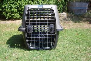petmate medium size dog crate victoria city victoria With medium size dog crate