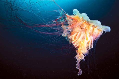 Can We Stop The Rise Of The Jellyfish