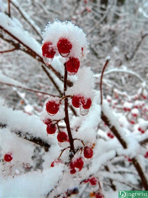 Winters First Snow Our Mind Is The Limit
