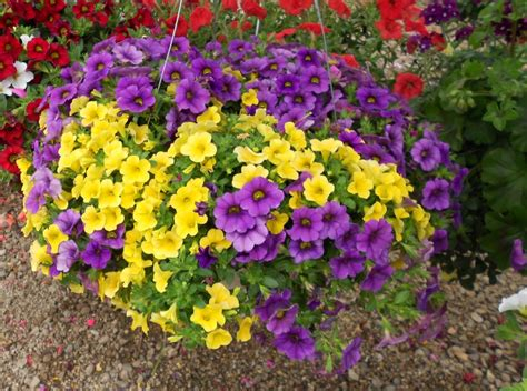 what is annual plant annual flowers vegetables roarks garden center