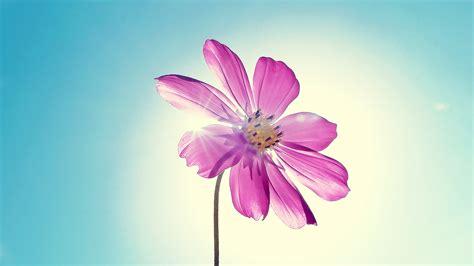 flower wallpaper hd airwallpapercom
