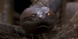 Review: Anaconda (1997)
