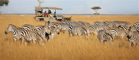 Exclusive Travel Tips for Your Destination Masai Mara in Kenya
